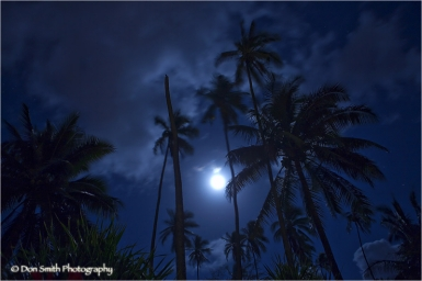 Full Moon Over Coconut Grove