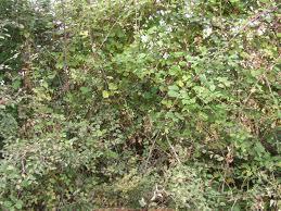 bushesimages