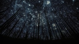 stars through trees